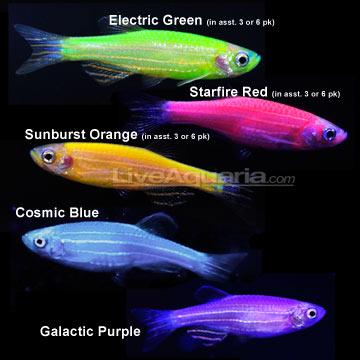 s GloFish Interests #1: orig